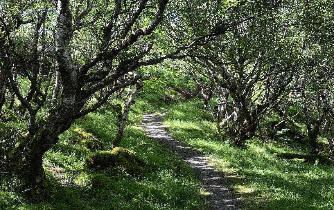Im Wald laufen - Es gibt wundervolle Momente der Einsamkeit (20×13)