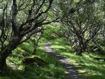 Im Wald laufen