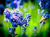 Abeja posada sobre flor violeta en fotografía de cerca