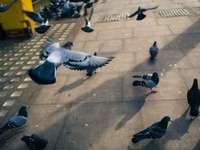 Taubenschwarm auf grauem Betonboden