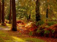 tagsüber braune und grüne Bäume