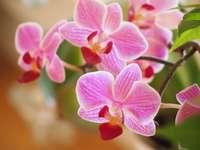 orquídea...