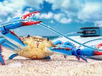 funny picture of a crab