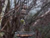 žlutý pták na hnědém krmítku