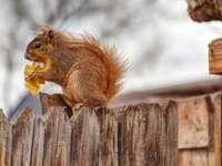 esquilo marrom em cerca de madeira marrom durante o dia