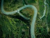 letecký pohled na zelený les