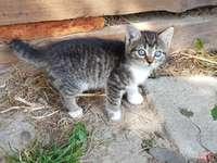 malá kočka