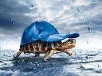 obrázek - želva v čepici