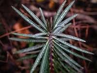 zelená rostlina v makro objektivu