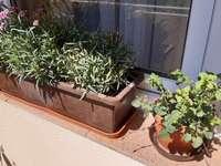 växter på fönsterbrädan