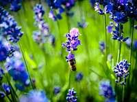 лилаво цвете в наклонена леща