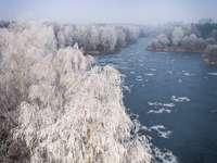 weiße Bäume zwischen See
