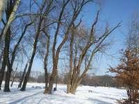 Egy téli parkban