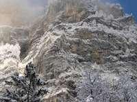 zasněžené stromy a hory