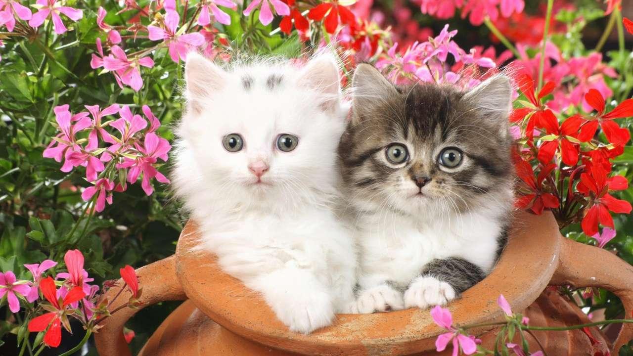 Две скъпи цветчета