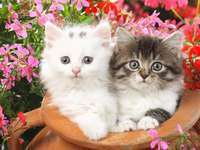 Dos preciosas florecillas