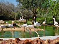 vy med flamingor