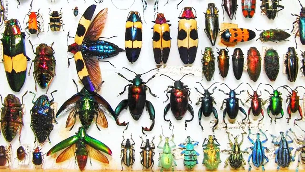 Insekter CEAMO STUDENTER