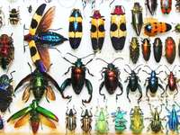 Insects CEAMO STUDENTS