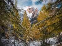 зелени дървета на покрита със сняг земя през деня