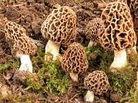 Pilze in WOnderland