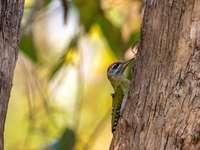 zöld és fehér madár nappali barna fa ága