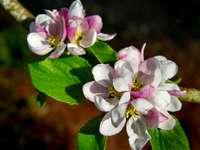 flor branca e rosa em lente tilt shift