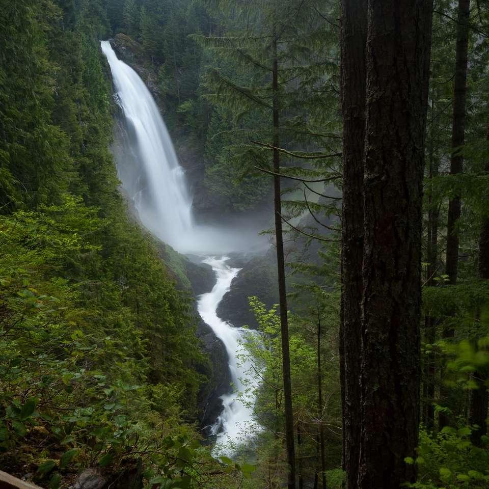 zielone drzewa i woda spada