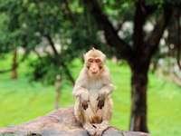 maimuță brună așezată pe stânca maro în timpul zilei