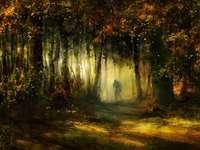 Schatten und Wald