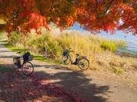 svart stadscykel parkerad bredvid fältet för grönt gräs