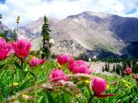 Flowers and mountains