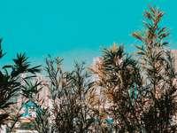 grön palm nära vit betongbyggnad under dagtid