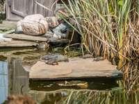 tartaruga marrone sul molo di legno marrone durante il giorno