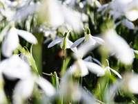 białe kwiaty w soczewce z funkcją tilt shift