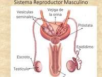 Γυναικείο αναπαραγωγικό σύστημα