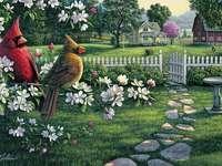 Ptaki kardynały.