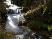 grünes Moos auf braunem Felsen nahe Fluss