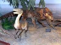 Museum der Evolution des Instituts für polnische Paläobiologie A.