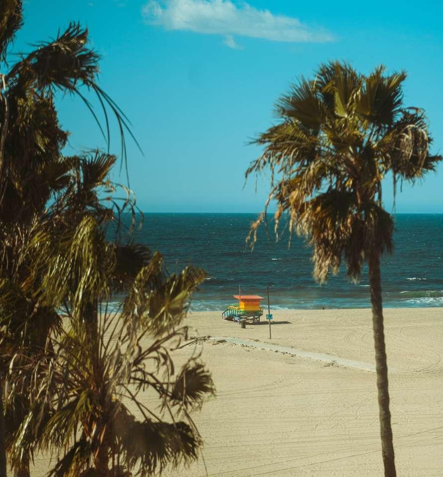 палми близо до водното тяло през деня - Лос Анджелис, Калифорния, САЩ (12×13)