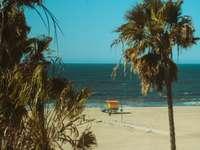 palmiers près d'un plan d'eau pendant la journée