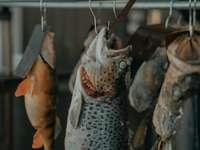 pești cenușii atârnați pe o bară de metal gri