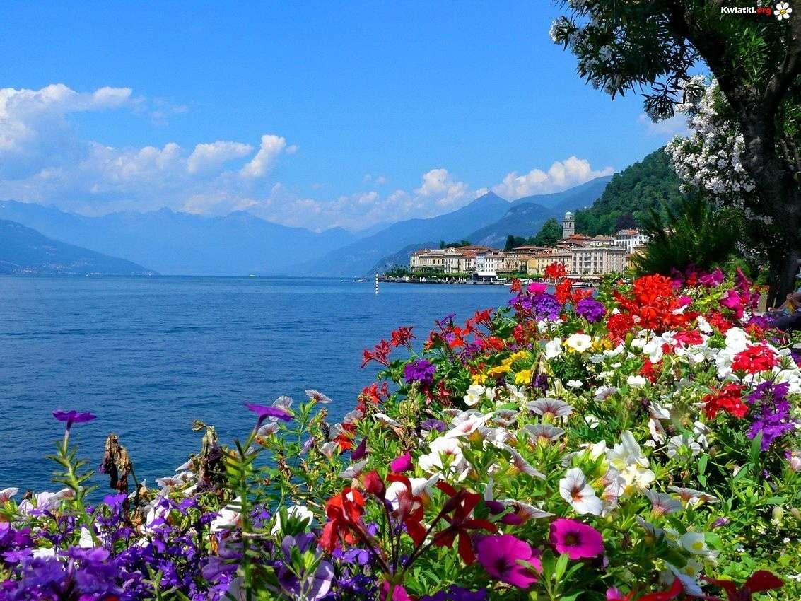 Blommor och havet