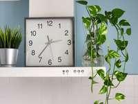 zelená rostlina vedle bílých obkladů