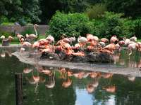 Фламинго в зоопарка DD