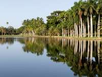 зелени дървета до езерото под синьо небе през деня