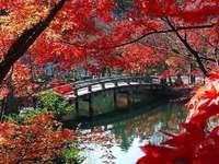 Herbst am Teich des Eikan-do-Tempels in Kyoto,