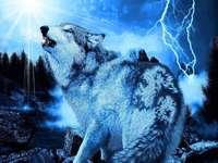 počítačová technika - vlk