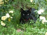 μαύρη γάτα στο πράσινο γρασίδι πεδίο κατά τη διάρκεια της ημέρας