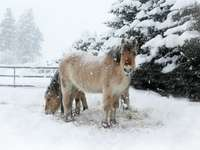 white and brown horse on snow covered ground during daytime